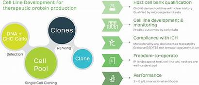 Cell Development Line Process Cdmo Services Biotech