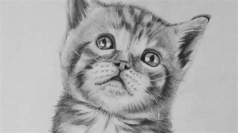 Pencil Drawing Of A Cat  Drawing Pencil