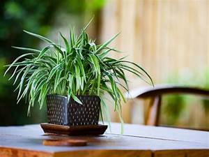 Top, 3, Air, Purifying, Indoor, Plants