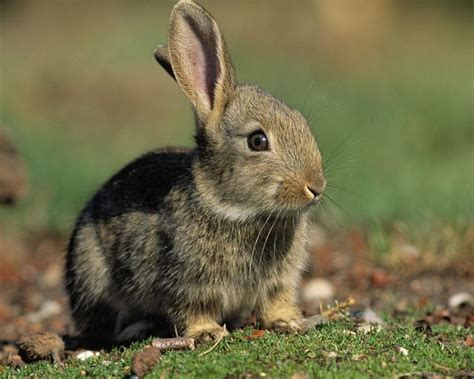 Domestic Animals Wallpaper - domestic animals images bunny hd wallpaper and background