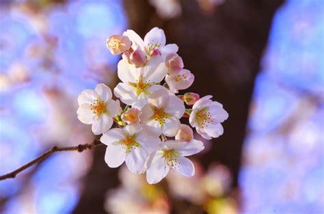 Free Images : branch plant fruit flower petal food