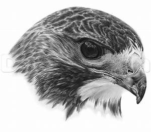 How to Draw a Realistic Hawk, Step by Step, Birds, Animals ...