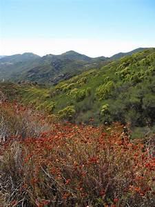 Walking in L.A. - Santa Monica Mountains National ...