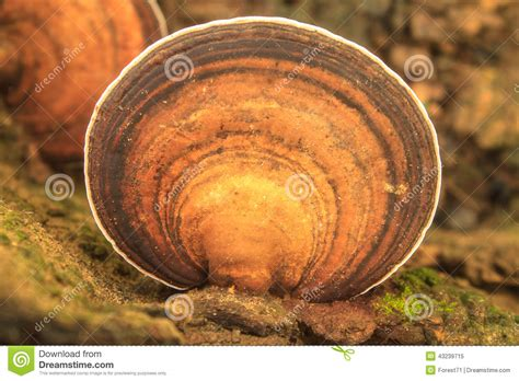 Close Up Mushroom In Deep Forest Stock Photo  Image 43239715
