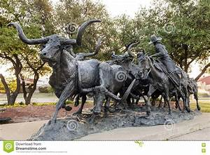 Longhorn Cattle Drive Statue In Fort Worth  Tx  Usa