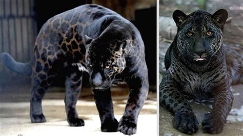 11 Crazy Animal Hybrids That Actually Exist