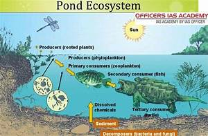 What Are The Functions Of A Pond Ecosystem