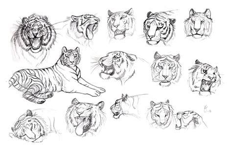 tiger expression studies  tigerty  deviantart