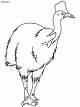 Coloring Cassowary Bird Printable Emu Audubon Luxury Rainforest Drawings Designlooter sketch template