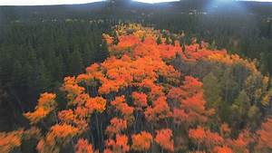 Fall Colors - Colorado 2017