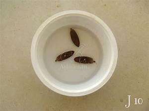 Comment Faire Germer Une Graine : faire pousser les graines de dattes guide astuces ~ Melissatoandfro.com Idées de Décoration