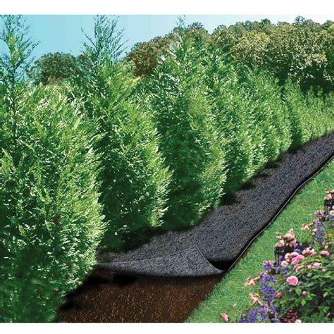 Feutre De Jardin Castorama by Feutre De Jardin Cap Vert Longueur 5 M Largeur 0 9 M