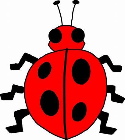 Ladybug Clip Bug Lady Clker Clipart Svg