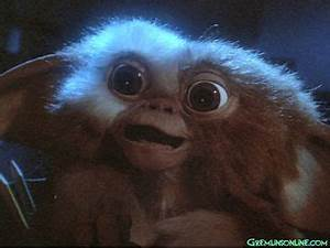 Gizmo...Sure he looks cute now... but we all know what ...