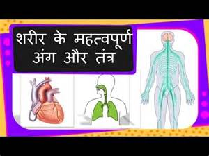 Human Body Systems and Their Organs
