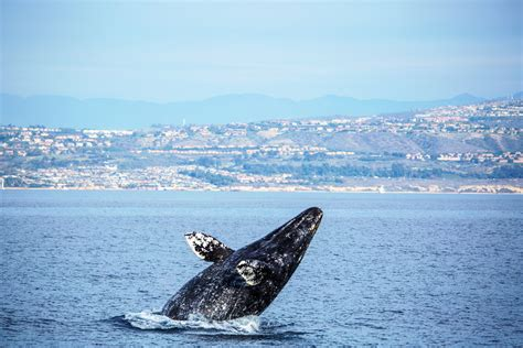 Boat Shipping California by Whale California 20 Whale Special