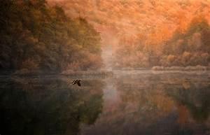 Landscape, Nature, Mountain, Forest, Lake, Birds, Flying