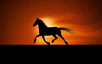 Horse Cute Wallpapers Running Wallpapertag