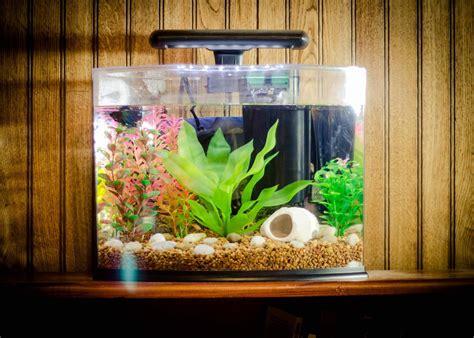 Home Aquarium Design Ideas by Small Fish Aquarium Ideas Goldfish Tropical Fish Small