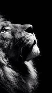 König Der Löwen Tapete : die besten 25 lion wallpaper iphone ideen auf pinterest k nig l we hintergrundbild und coole ~ Frokenaadalensverden.com Haus und Dekorationen