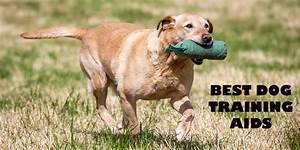 shop for labrador accessories supplies read our reviews With best dog training sites