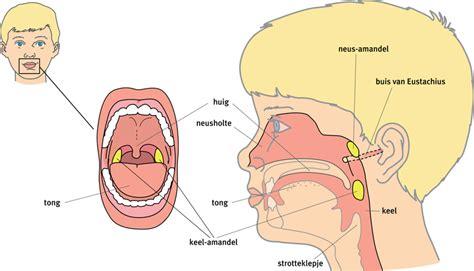 dicht oor bij verkoudheid
