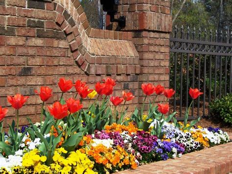 bulb garden ideas plant bulbs now for gorgeous spring color