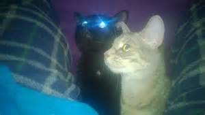 glow in the cats glow in the cats