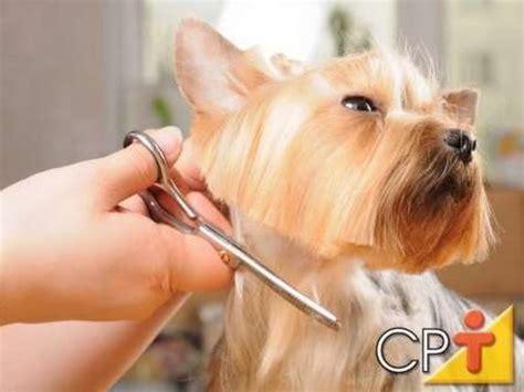 si e de massada curso como fazer banho e tosa em cães tipos de tosa
