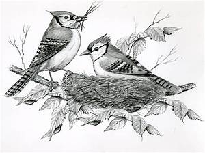 Bird Watcher U0026 39 S General Store