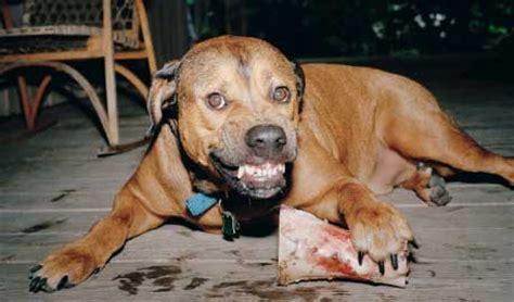 aggression  dogs  friend