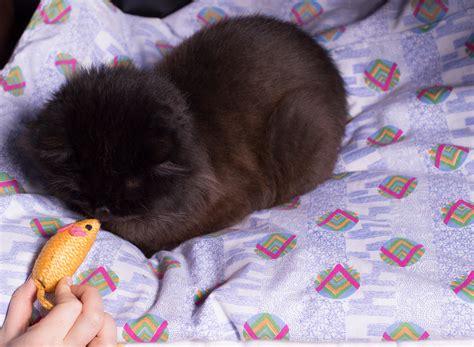 bond   feral kitten  steps  pictures