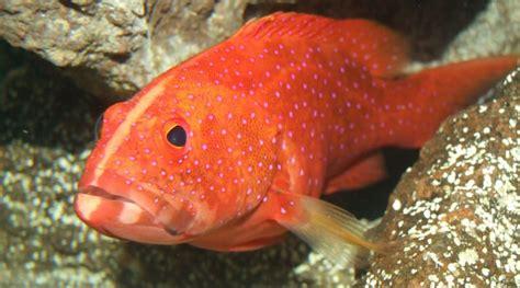herring herrings story fishy ways non plant fish constructors task tour grouper
