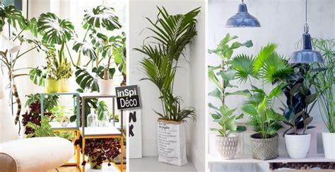 plante pour chambre à coucher un coin plantes vertes dans votre intérieur voici 20 idées