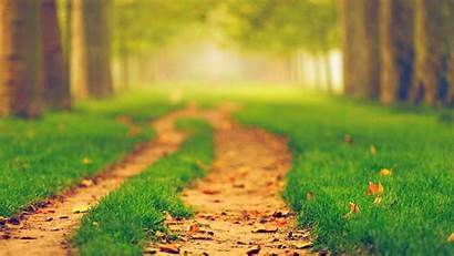 Blurred Nature Path Wallpapers Blur Blurry Lens