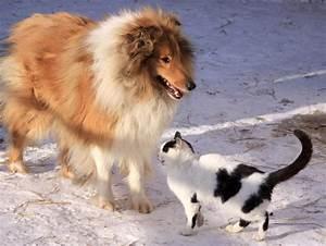 Site De Discussion : site de rencontre pour chat et chien ~ Medecine-chirurgie-esthetiques.com Avis de Voitures