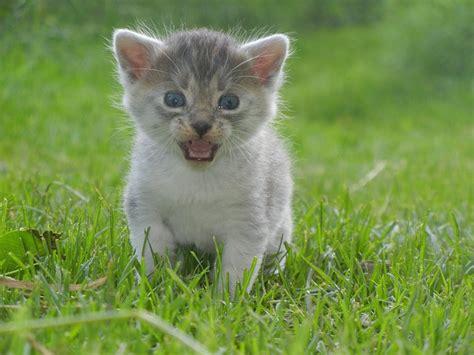 kosten chip kitten wat zijn de kosten zoekdierenartsnl