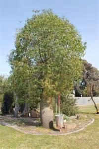 file finley bottle tree jpg