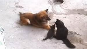 Laisser Un Chien Seul Quand On Travaille : ce chat pr sente ses b b s un chien ~ Medecine-chirurgie-esthetiques.com Avis de Voitures
