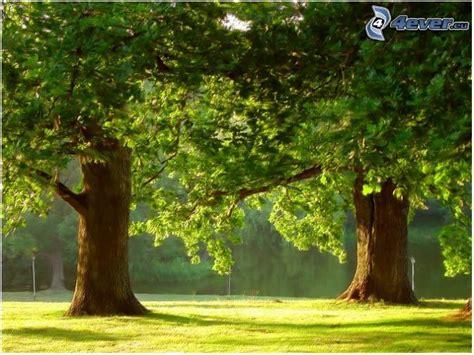 gli alberi enormi
