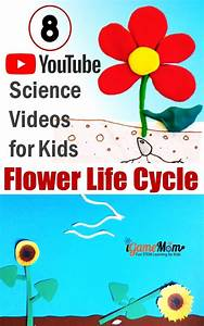 8 Life Cycle Of Flowering Plant Science Youtube Videos For