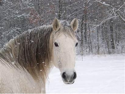 Horse Cute Wallpapers Deviantart Tablet Wallpapertag