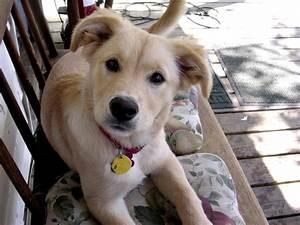 pretty panion dog breeds