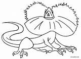 Lizard Coloring Pages Frilled Printable Cool2bkids sketch template