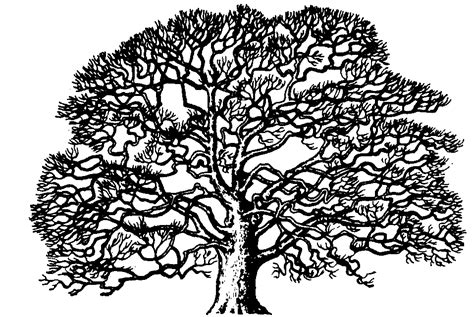 oak tree clipart black and white royal connections the family tree the entirety of