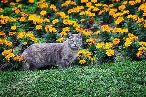 Repulsif Chat Exterieur Jardiland : r pulsif pour chat comment le choisir et l 39 utiliser ~ Melissatoandfro.com Idées de Décoration
