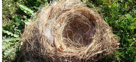 Leeres Nest Syndrom by Wenn Die Kinder Abschied Nehmen