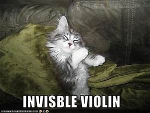 little lady, big apple: Invisible Moments: Funny Cats, Part 2  Funny