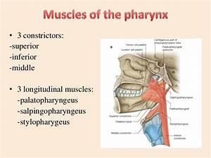 Lec 5 Pharynx Pt U0026rc