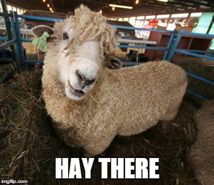 Sheep Memes - sheep imgflip